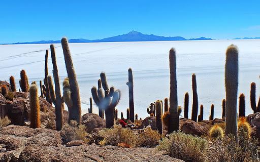 Isla del Pescado - Bolivia