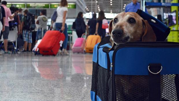 perro viajando en aeropuerto de Mexico
